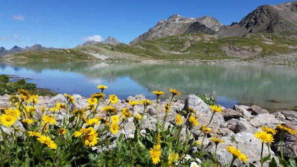 Bergsee im Vordergrund Blumen